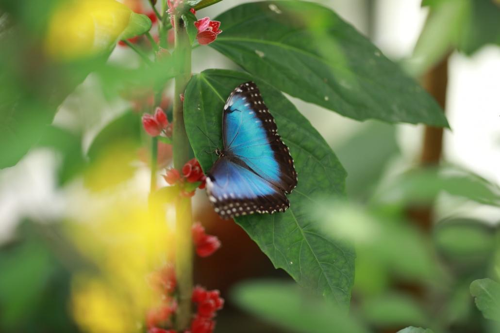 Schmetterlingsgarten Grevenmacher (Luxembourg)