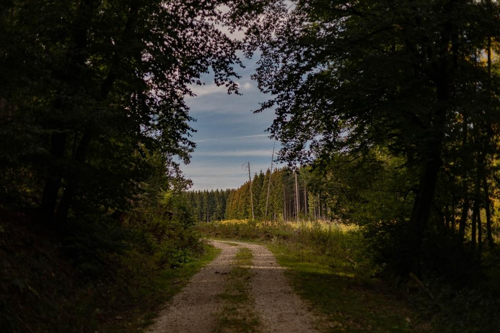 Wandern im Hunsrück - Die zahlreichen Wanderwege des Hochwaldes sind sehr abwechslungsreich