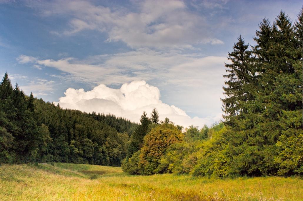 Sommer im Hunsrück - Landhaus HEIMISCH