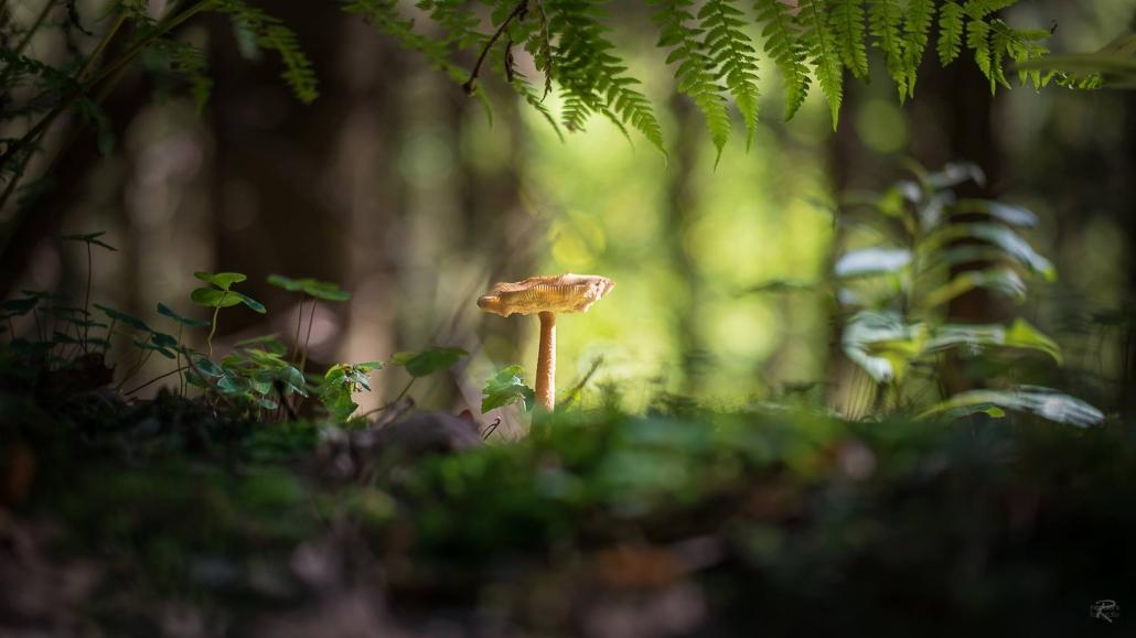 Der Herbst im Hochwald - Die Wanderweg beginnen direkt vor der Tür - Landhaus HEIMISCH