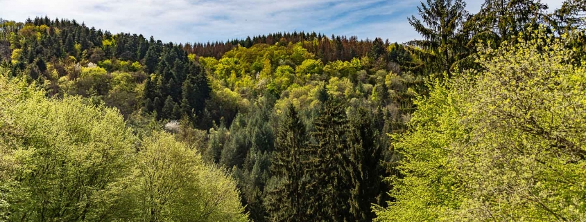 Die Sinnesbank (mit tollen Ausblick) auf der Traumschleife - Schiefer-Wackenweg