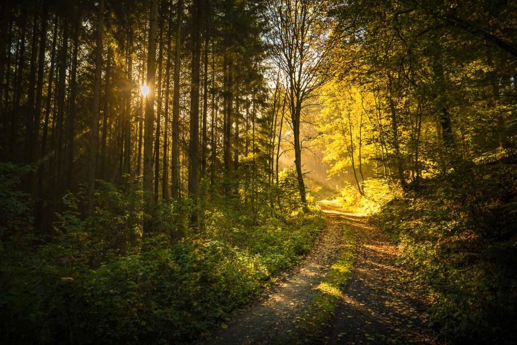"""Das ganze Jahr über laden die Wanderwege und """"Traumschleifen"""" des Hunsrück zum Naturerlebnis ein"""