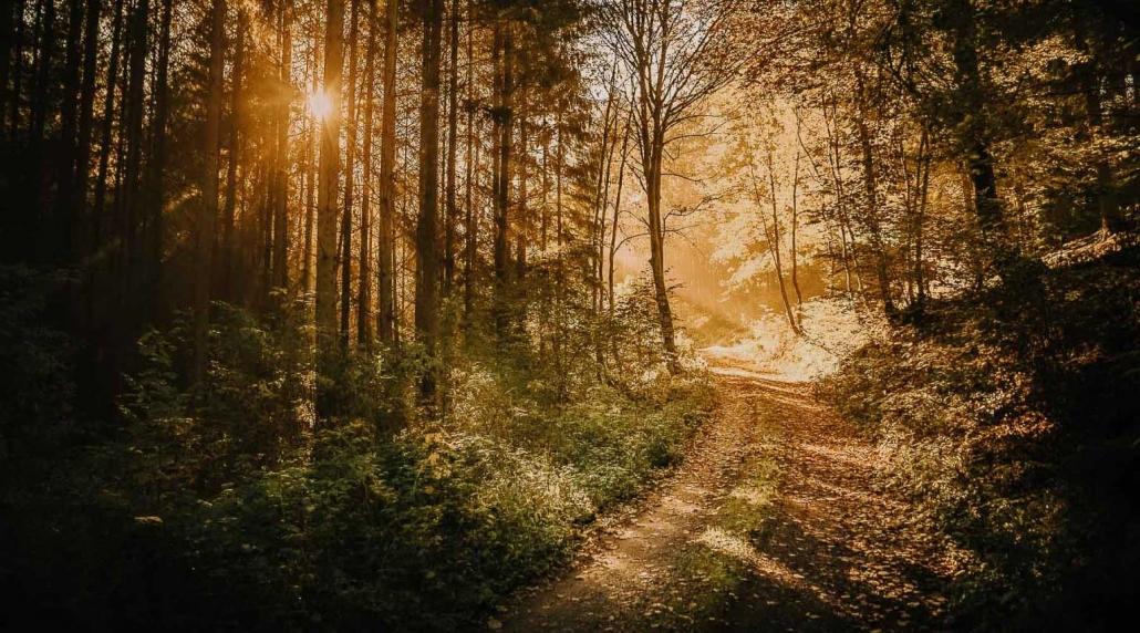 """Wanderurlaub - Die einmalige Ruhe des Hunsrücks erfährt man am besten auf den zahlreichen Premiumwanderwegen """"Traumpfaden"""" - Das Landhaus HEIMISCH ist ein idealer Ausgangspunkt für einen Wanderurlaub im Hunsrück"""